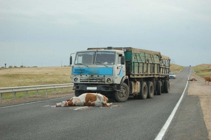 Тракторы и сельхозтехника МТЗ 82 в Новосибирске. Купить.